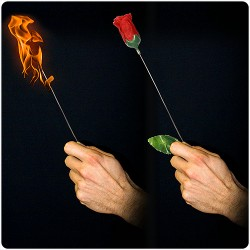 De antorcha a rosa - plus (torch to rose plus)