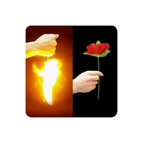 Aparición de rosa (appearing rose)